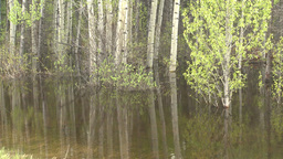 HD2008-6-3-67 swamp marsh Stock Video Footage