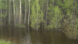HD2008-6-4-1 swamp forest Stock Video Footage