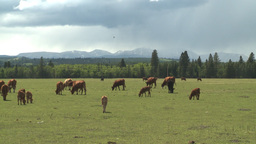HD2008-6-4-9 cattle ranch distant rain Stock Video Footage