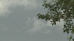 dark cloud trees TL Footage