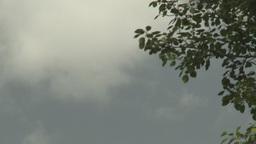 dark cloud trees TL Stock Video Footage