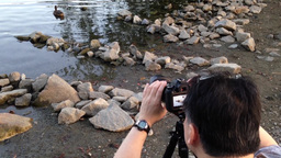 Photographer taking picture of duck Footage
