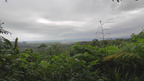 pan at a viewpoint in daintree forest Footage