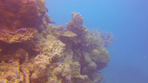 a scuba diver perspective close to a large coral a Stock Video Footage