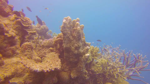 a scuba diver perspective close to a large coral a Footage