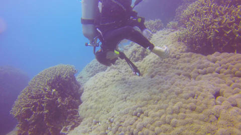 a scuba diver waves hands to move cauli flower pla Stock Video Footage