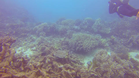 scuba diver swims just above some coral reef on th Stock Video Footage