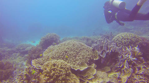 scuba diver swims just above some coral reef on th Footage