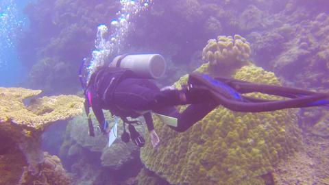 2 scuba divers swim through coral to find a sea cu Footage