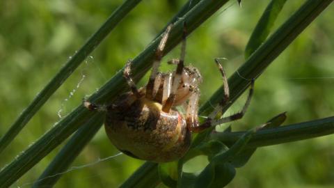 Spider 4 Footage