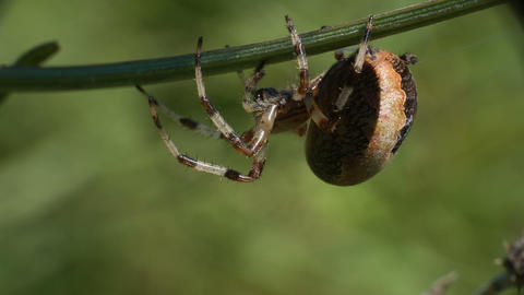 Spider 3 Footage