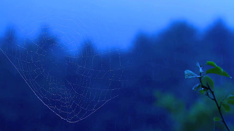 Raindrops on the spider web Stock Video Footage