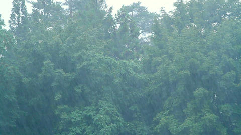 Heavy Rain In The Forest stock footage