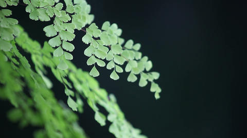fern background Stock Video Footage
