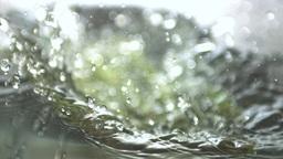 Aspargus stalks falling in water Footage
