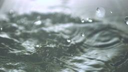 Corn cobs falling in water Footage