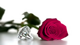 Diamond spinning beside pink rose Footage