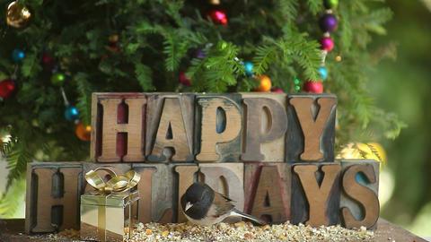 three birds at a Christmas feeder Footage