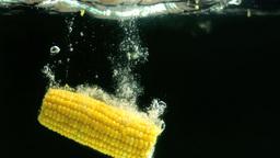 Corn cob falling in water Footage