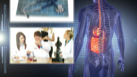 Revolving human form showing organs with montage o Animation