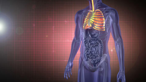 Revolving human figure showing organs with montage Stock Video Footage