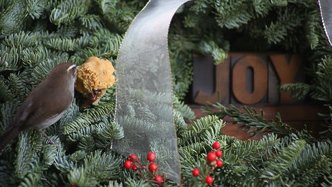 wren on a Christmas wreath with the word joy Footage
