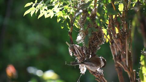 bird gathers nesting material Footage