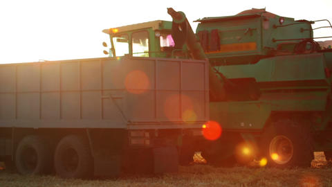 Harvester is Unloading Grain to the Truck and Lens Footage