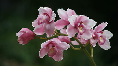 orchid Footage