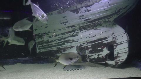 Aquarium Design stock footage