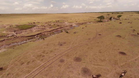 Wildebeest Mass For Mara River Crossing Stock Video Footage