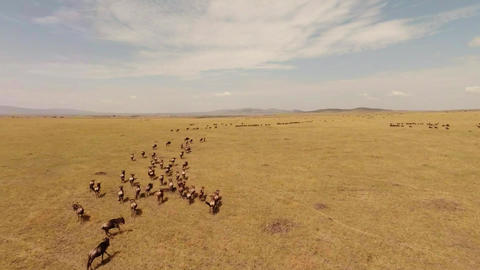 Savanna. Aerial shot Stock Video Footage