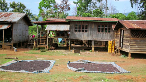 BOLAVEN PLATEAU, PAKSE, LAOS - MARCH 2014: coffee  Footage