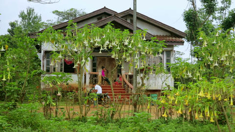 PAKSE, LAOS - MARCH 2014: village house with orchi Stock Video Footage