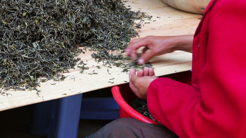 woman workers separating tea leaves from branches Stock Video Footage