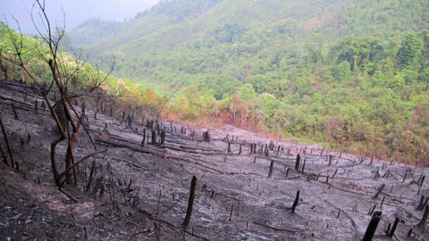 Deforestation, after forest fire, natural disaster Stock Video Footage