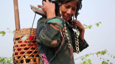 PONGSALI, LAOS - APRIL 2014: indigenous native tri Stock Video Footage
