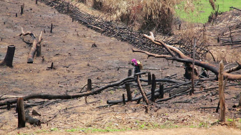 Akha Villagers Carry Back and Walking in Burnt For Footage