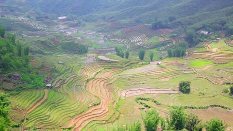 gorgeous farm fields, rice paddy terraces, Sapa, V Stock Video Footage