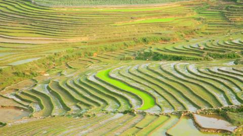gorgeous farm fields, rice paddy terraces, Sapa, V Footage
