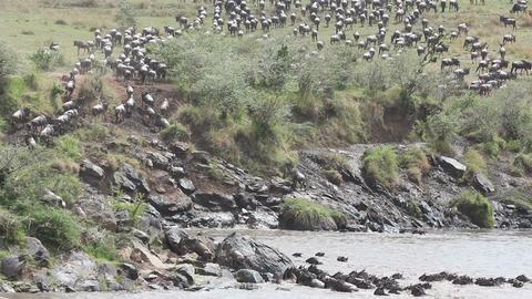 Wildebeest migration 07 (85) Stock Video Footage