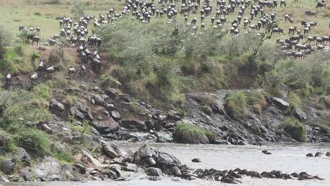 Wildebeest migration 07 (85) Footage