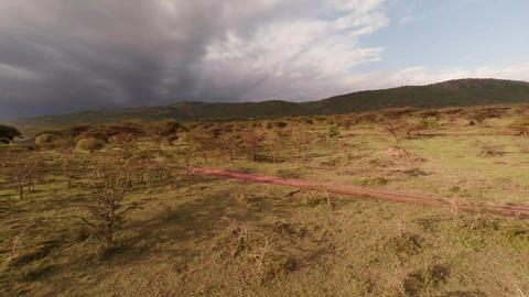 Savanna. Landscape. Aerial shot Stock Video Footage