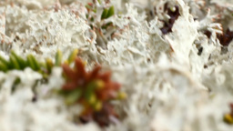 Macro World Polar Plant The White Dead Dry stock footage