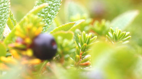 macro stone vegetation polar leaf summer Footage