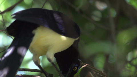015 Colourfull bird in tree Stock Video Footage