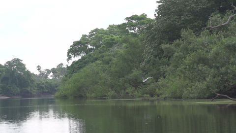 036 Pantanal , boating on the river , Cocoi Heron Stock Video Footage