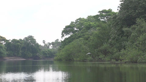 036 Pantanal , boating on the river , Cocoi Heron  Footage