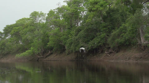037 Pantanal , boating on the river , Cocoi Heron  Footage