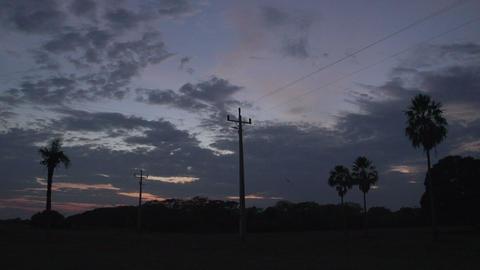 068 Pantanal , sunrise , landscape , palmtrees Footage